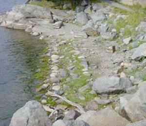 steinrader-i-vann